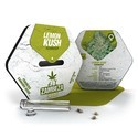 Lemon Kush (Zambeza) féminisée