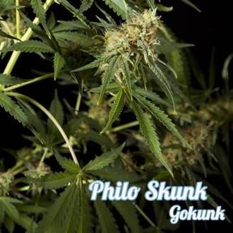 Philo Skunk (Philosopher Seeds) féminisée