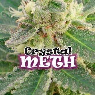 Crystal M.E.T.H. (Dr. Underground) féminisée
