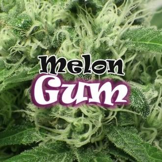 Melon Gum (Dr. Underground) féminisée