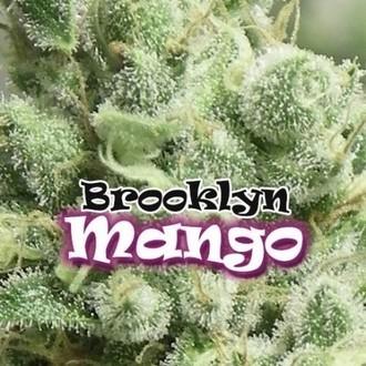 Brooklyn Mango (Dr. Underground) féminisée