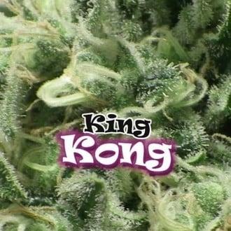 King Kong (Dr. Underground) féminisée