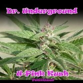 U - Pink Kush (Dr. Underground) feminisiert