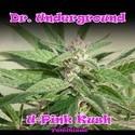 U-Pink Kush (Dr. Underground) féminisée