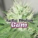 Auto Melon Gum (Dr. Underground) féminisée