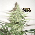Diesel Haze Auto (Flash Auto Seeds) féminisée