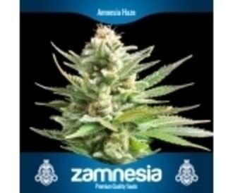 3 Graines de cannabis gratuit (Zamnesia Seeds)