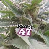Kong 47 (Dr. Underground) Femminizzata