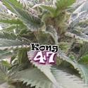 Kong 47 (Dr. Underground) féminisée
