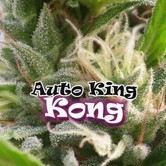 Auto King Kong (Dr. Underground) féminisée