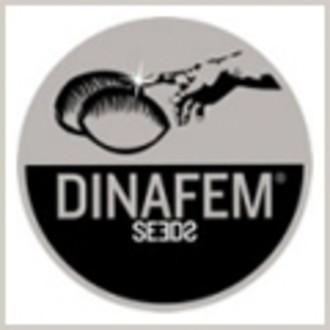 Graine gratuitement (Dinafem) feminisee