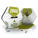Pineapple Express (Zambeza) féminisée