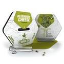Blueberry Cheese (Zambeza) féminisée