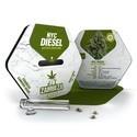 NYC Diesel Autoflowering (Zambeza) féminisée