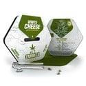 White Cheese Autoflowering (Zambeza) féminisée