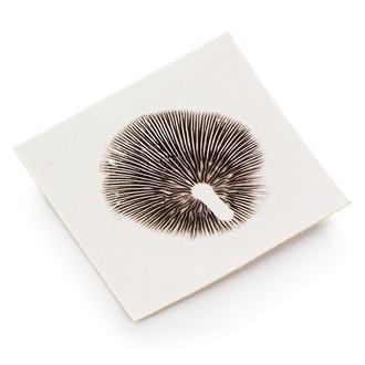 Empreinte de Spores de Truffes Psilocybe Galindoi