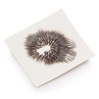 Empreinte de Spores de Truffes Psilocybe Mexicana