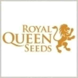 Graine gratuitement (Royal Queen Seeds) Sour Diesel