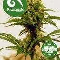 Cheese x Haze (Kiwi Seeds) féminisée