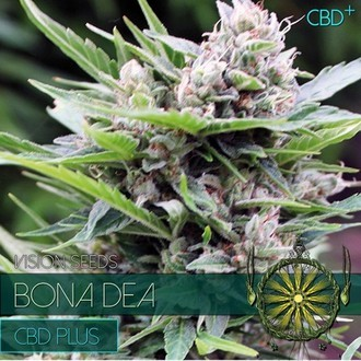 Bona Dea (Vision Seeds) féminisée