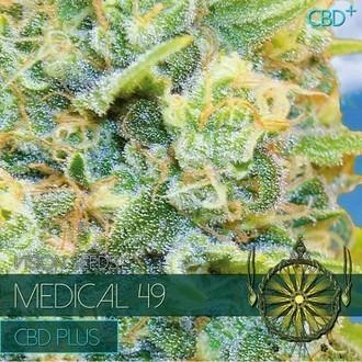 Medical 49 (Vision Seeds) féminisée
