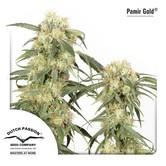 Pamir Gold (Dutch Passion) féminisée