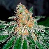 CBD Jam (Delicious Seeds) féminisée