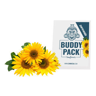 Tournesol (Helianthus annuus) Buddy Pack