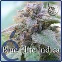 Blue Elite Indica (Elite Seeds) féminisée