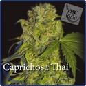 Caprichosa Thai (Elite Seeds) féminisée