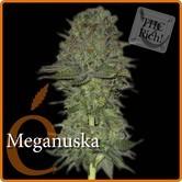 Maganuska (Elite Seeds) féminisée