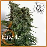Elite 47 (Elite Seeds) feminisiert