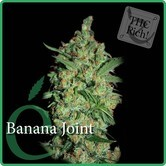 Banana Joint (Elite Seeds) feminisiert