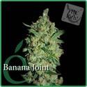Banana Joint (Elite Seeds) féminisée