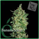 Banana Joint (Elite Seeds) Femminizzata
