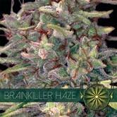 Brainkiller Haze (Vision Seeds) féminisée