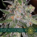 Vision Cookies (Vision Seeds) féminisée