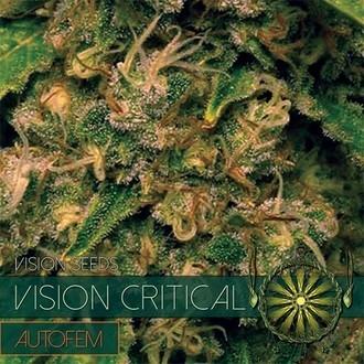 Vision Critical Autoflowering (Vision Seeds) Féminisée
