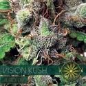 Vision Kush Autoflowering (Vision Seeds) Féminisée