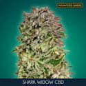 Shark Widow CBD (Advanced Seeds) feminisee