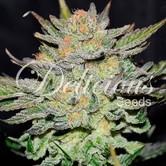 Auto Blue Ace CBD (Delicious Seeds) feminized