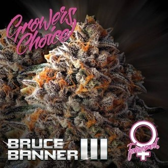 Bruce Banner III (Growers Choice) Féminisée