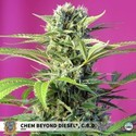 Chem Beyond Diesel CBD (Sweet Seeds) féminisée