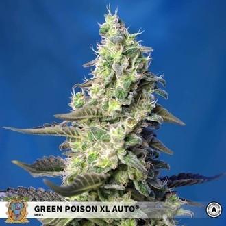 Green Poison XL Auto (Sweet Seeds) Féminisée