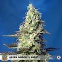 Green Poison XL Auto (Sweet Seeds) feminized