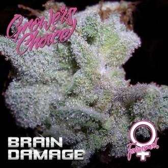 Brain Damage (Growers Choice) Féminisée