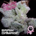 Brain Damage (Growers Choice) Féminisée
