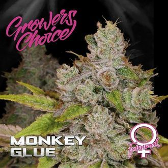 Monkey Glue (Growers Choice) Féminisée