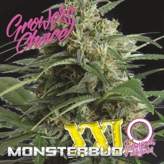 Monsterbud XXL Auto (Growers Choice) Féminisée