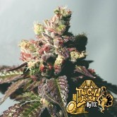 Passion Berry (Cali Connection) feminized